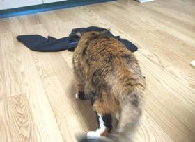 落ちている服を見つけた雑種猫くるみ