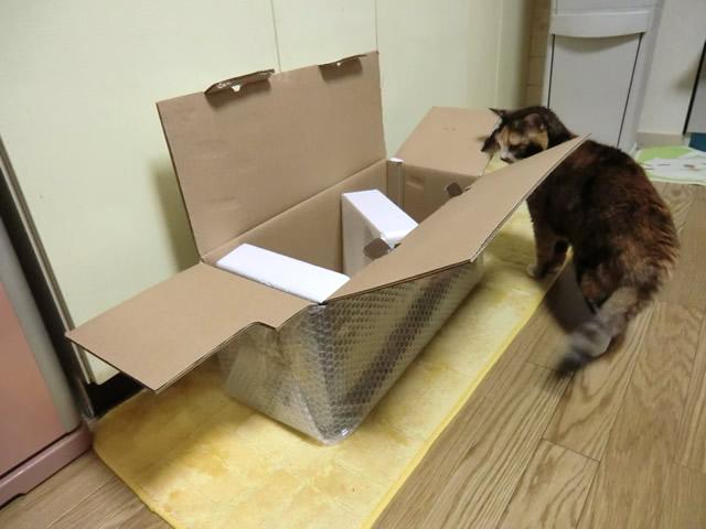 箱を見つける 雑種猫 くるみ