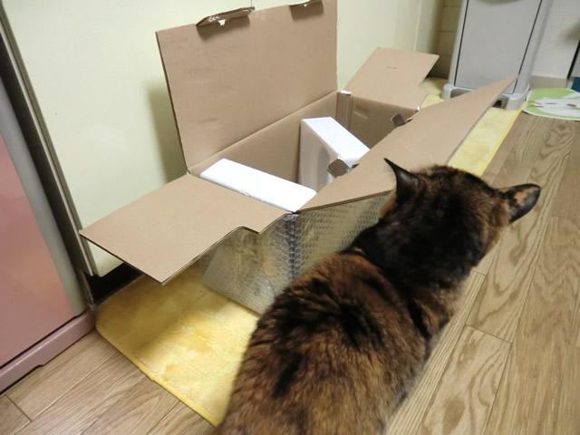 箱の中を見る くるみ