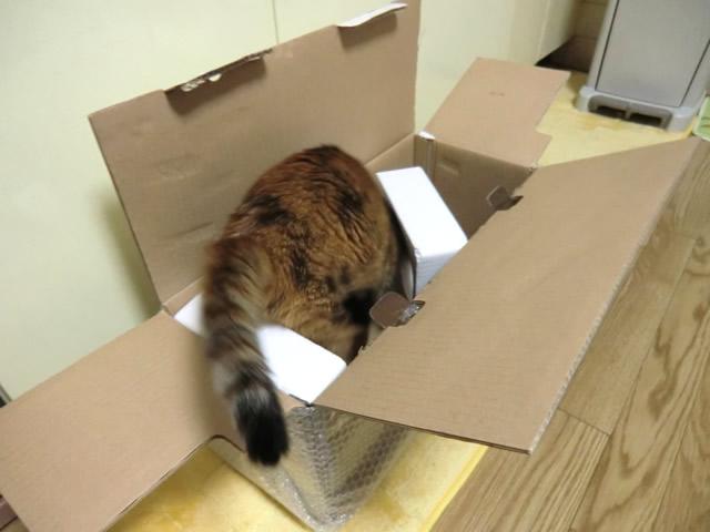 箱の中に飛び込む くるみ
