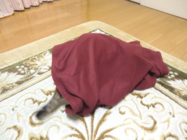 上着の奥まで入る ネコ くるみ