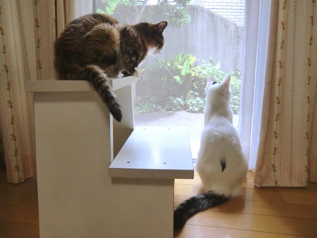 窓から外を眺める 雑種猫 くるみ&こむぎ