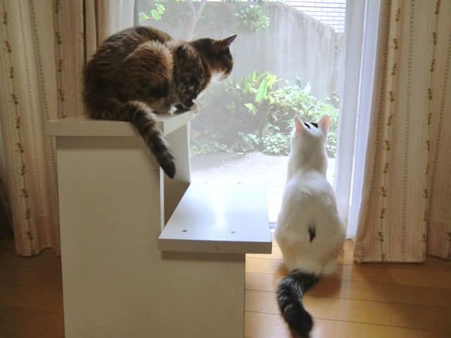 窓から外を見回す くるみ&こむぎ