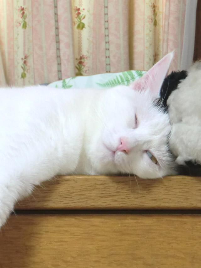 白目をむいて寝る 子猫 こむぎ