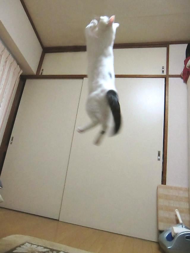 ジャンプして何かを掴んだ こむぎ