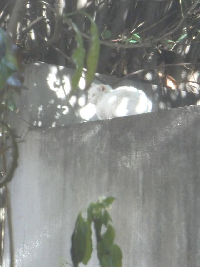 白ネコがいることに気づく くるみ