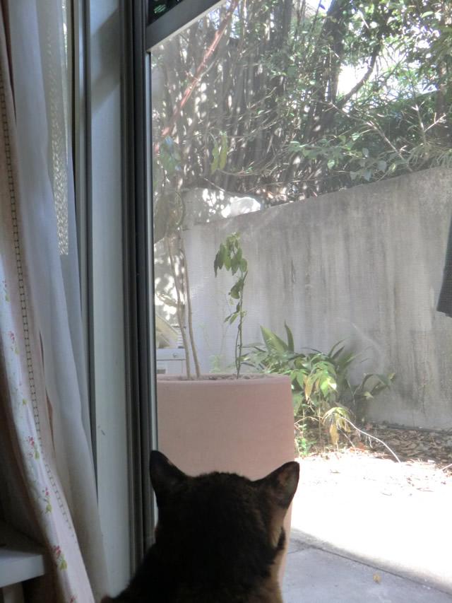 白猫をずっと見る くるみ