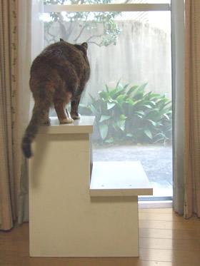 窓から外を見る雑種猫くるみ