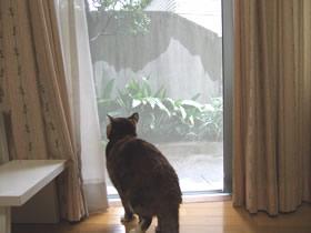 雪の降る外を見る雑種猫くるみ