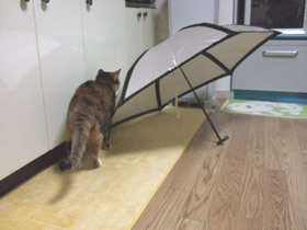 傘を見るくるみ