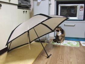 傘の外側を見るくるみ