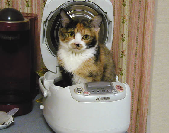 炊飯器で温まる雑種猫